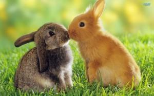 rabbits-3418-1920x1200